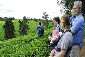 Growing Status of Tea Tourism